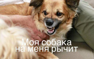 Моя собака на меня рычит